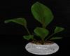 Modern Plant {F}