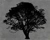honey tree/twig shadow