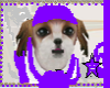 DOG-RC