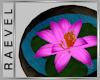 !R! lotus vase