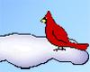 Cardinal in Snow Animate