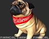 Marcus- Pug Dog
