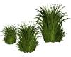 Tropical Beach Grass 3