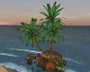 O.B. Palm Tree and Rocks