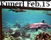 (K) Shark Aquarium