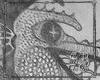 SB Draco Pisces