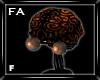 (FA)BrainHeadF Og