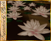 I~Sepia Water Lilies