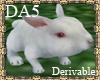 (A) Bunny Rabbit