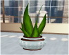 J|Grayson Plant
