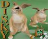 Room pet Bunny