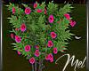 Mel-Flower Bush