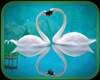 !!! WHITE LOVERS SWANS