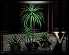  V  WinterFeel Plant2