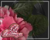 Pink Hydrangea w/Leaves