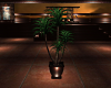 SUMMER POTTED PLANT