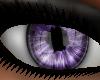 !   Reality Purple