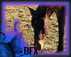 [*]BFX Horse Sense