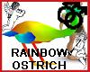 Rainbow Ostrich Pet