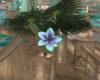 Moonlight Plant