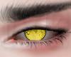 Couple Yellow Eyes M