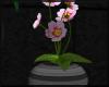 Primrose - Grey Pot