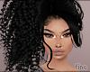 F. Calida Black
