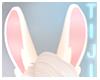 Alice | Ears 11