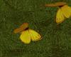 Love : Butterflies