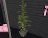 420 POT PLANT