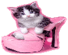 Cat in pink shoes