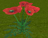 TF* Group Moving Poppies