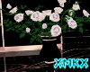 xMKx I DarkGarden Roses