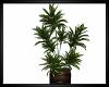 Perfect Plant