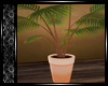 [W] Tropical Plant  ♡