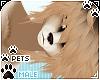[Pets] Kimi | Aisha
