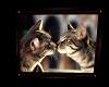 Frame Cute Cat Pic 2
