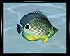 -S-Atlantica Fish 2