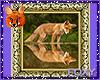 A Foxy Reflection