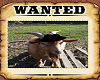 wanted goat