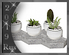 Rus: PARIS table plants