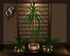 $ Mocca plant trio