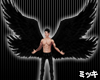 ! Black Wings #Animated