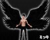 ! Black Wings #Animated
