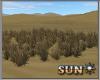!SR! Desert  grass