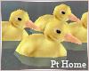 Swimming Baby Ducks