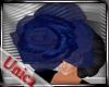 [U]Romanza hat