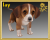 Beagle Puppy Pet