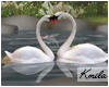 |K Wedding Swans