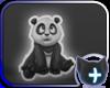 ~! Panda Shirt !~